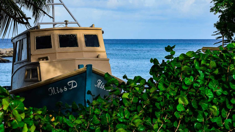 Boat & Greenery
